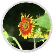 Sunflower 2016 4 Of 5 Round Beach Towel by Tina M Wenger