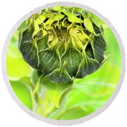 Round Beach Towel featuring the photograph Sunflower Beauty 666 by Kevin Chippindall
