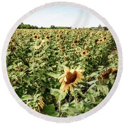 Round Beach Towel featuring the photograph Sunflower Field by Alexey Stiop