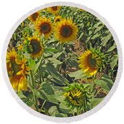 Sunflower Field Two Round Beach Towel