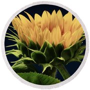 Round Beach Towel featuring the photograph Sunflower Foliage And Petals by Chris Berry