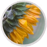 Round Beach Towel featuring the photograph Sunflower Haze by Arlene Carmel
