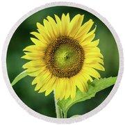 Sunflower In Bloom Round Beach Towel