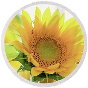 Sunflower In Golden Glow Round Beach Towel