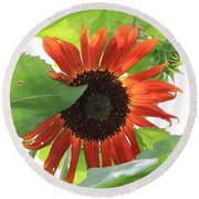 Sunflower In The Afternoon Round Beach Towel