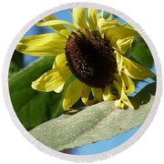 Sunflower, Lemon Queen, With Pollen Round Beach Towel