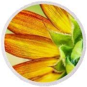Sunflower Macro 1 Round Beach Towel