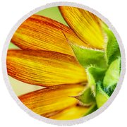 Sunflower Macro 1 Round Beach Towel