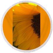 Sunflower Macro Round Beach Towel by Nance Larson