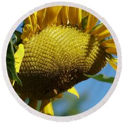 Sunflower, Mammoth With Bees Round Beach Towel