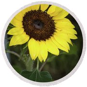 Round Beach Towel featuring the photograph Sunflower by Nikki McInnes