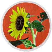 Round Beach Towel featuring the photograph Sunflower On Red 2 by Sarah Loft
