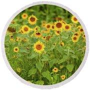 Sunflower Patch Round Beach Towel