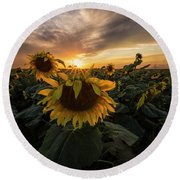 Round Beach Towel featuring the photograph Sunflower Sunstar  by Aaron J Groen