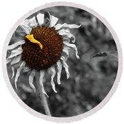 Sunflower- The End Of Summer Round Beach Towel
