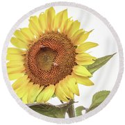 Round Beach Towel featuring the photograph Sunflowers 10 by Andrea Anderegg
