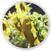 Round Beach Towel featuring the photograph Sunflowers 4 by Andrea Anderegg