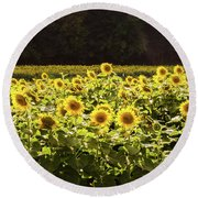 Round Beach Towel featuring the photograph  Sunflowers 5 by Andrea Anderegg