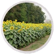 Round Beach Towel featuring the photograph  Sunflowers 6 by Andrea Anderegg