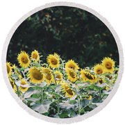 Round Beach Towel featuring the photograph Sunflowers 7 by Andrea Anderegg