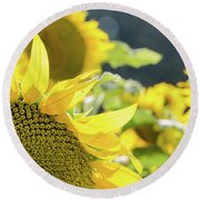 Round Beach Towel featuring the photograph  Sunflowers 8 by Andrea Anderegg