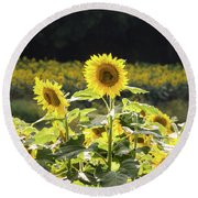 Round Beach Towel featuring the photograph Sunflowers 9 by Andrea Anderegg