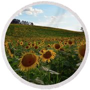 Sunflowers Fields  Round Beach Towel