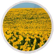Sunflowers Galore Round Beach Towel by Catherine Sherman