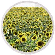 Sunflowers Mattituck New York Round Beach Towel