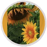 Sunflowers Past And Present Round Beach Towel