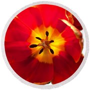 Sunkissed Tulips Round Beach Towel
