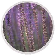 Sunlight On Lavender Round Beach Towel