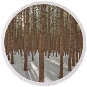 Sunlight Filtering Through A Pine Forest Round Beach Towel