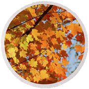 Round Beach Towel featuring the photograph Sunlight In Maple Tree by Elena Elisseeva