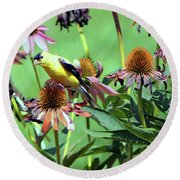 Sunlight On An American Gold Finch Round Beach Towel