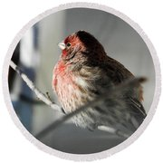 Sunlight On My Feathers Round Beach Towel by Janice Adomeit
