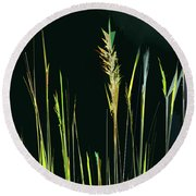 Sunlit Grasses Round Beach Towel