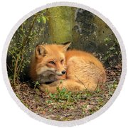 Sunning Fox Round Beach Towel by Debbie Green