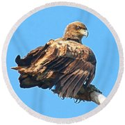 Round Beach Towel featuring the photograph Sunning Out On A Limb by Debbie Stahre