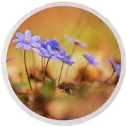 Round Beach Towel featuring the photograph Sunny Afternoon With Liverworts by Jaroslaw Blaminsky