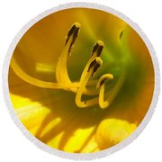 Sunny Day Day Lily 1 Round Beach Towel