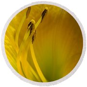 Sunny Day Day Lily 3 Round Beach Towel