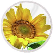 Round Beach Towel featuring the photograph Sunny Flower by Jenny Rainbow