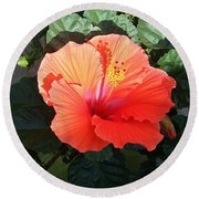 Round Beach Towel featuring the photograph Sunny Hibiscus by Ellen Barron O'Reilly