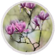Sunny Impression With Pink Magnolias Round Beach Towel