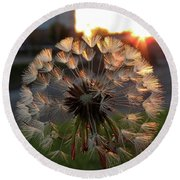 Sunrise Dandelion Round Beach Towel