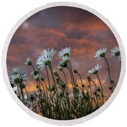 Sunset And Daisies Round Beach Towel