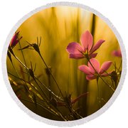 Sunset Beauties Round Beach Towel by Parker Cunningham
