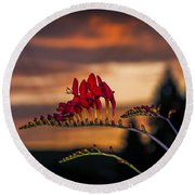 Sunset Crocosmia Round Beach Towel