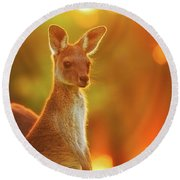Round Beach Towel featuring the photograph Sunset Joey, Yanchep National Park by Dave Catley